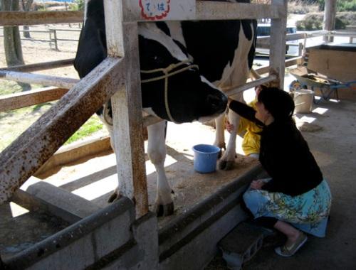milking2.jpg
