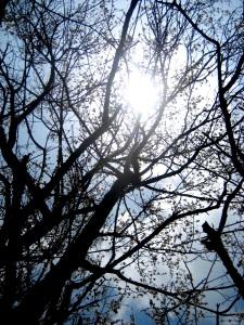 plumblossomsun.jpg